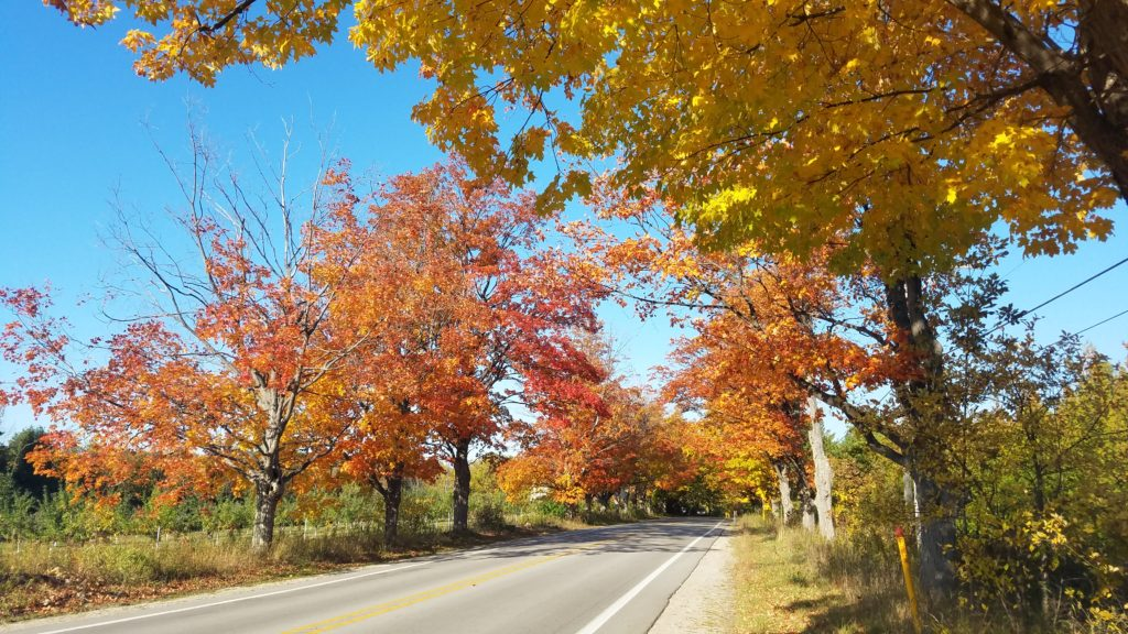 Bright fall colors along the scenic drive on Hwy 22.